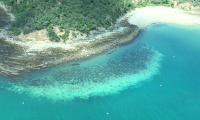 Great Barrier reef sees most widespread bleaching ever recorded, scientists say
