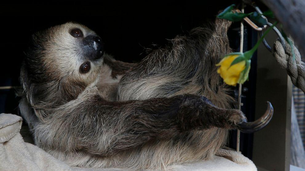 Zoos turn to social media to delight, raise money amid virus