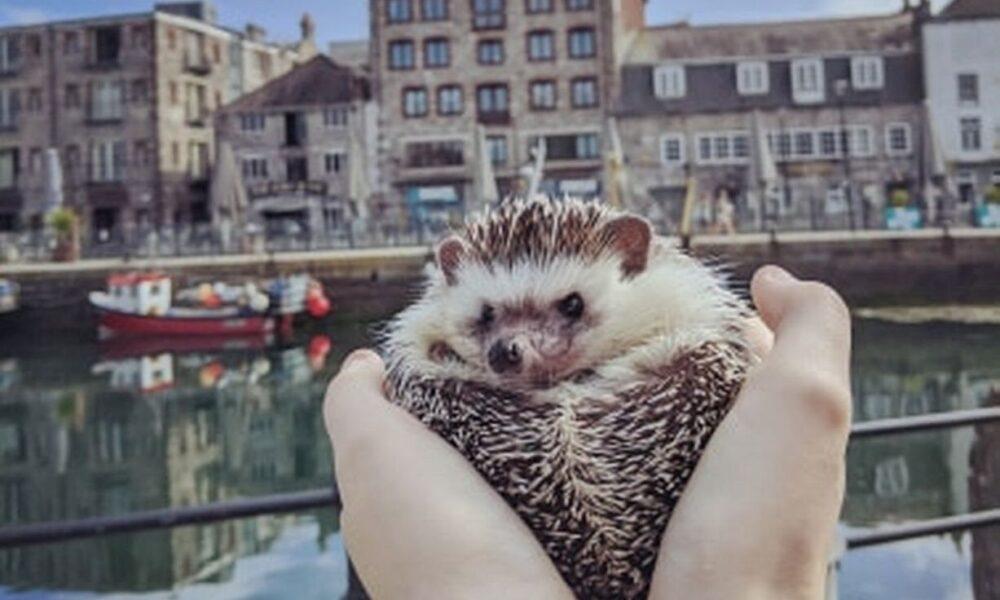 Hedgehog goes viral on Instagram after taking pictures at landmarks in England