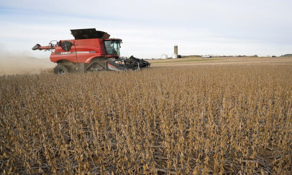 Column: Crop Watch – Corn, soy conditions hold as critical weather period begins – Reuters UK